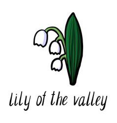 flower of lily of the valley vector image