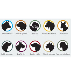 set of portraits silhouettes of dog breeds vector image