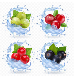 berries set with cranberry red currants vector image