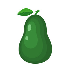 colorful avocado isolated on vector image