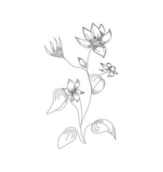 flowers drawing with line-art on white backgrounds vector image