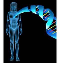 Deoxyribonucleic acid vector image