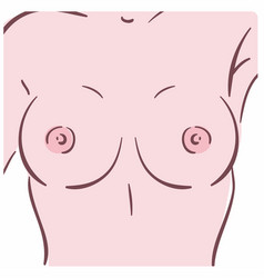 A female breast vector