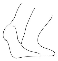 Ankles vector image