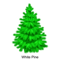 Christmas tree like white pine for New year vector image