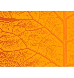 Dry autumn leave template vector