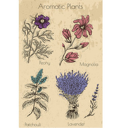 graphic set with aromatic plants and flowers vector image
