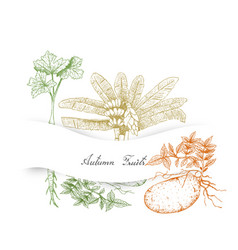 Hand drawn autumn vegetables of ensete banana par vector