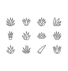 aloe vera flat line icons succulent tropical vector image