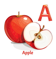 Alphabet letter a apple vector
