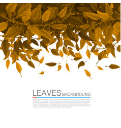 Cover orange leaves on a white background vector