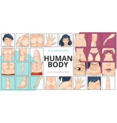 Human body parts composition vector