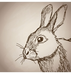 Rabbit portrait forest hand drawing vintage vector