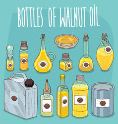 set of containers with walnut oil vector image