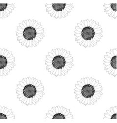 sunflower seamless on white background vector image vector image