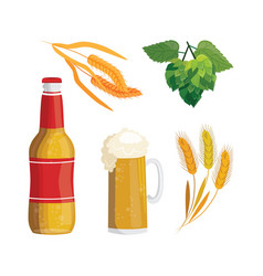 beer bottle mug hop and rye ears set vector image