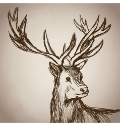 Deer portrait forest hand drawing vintage vector