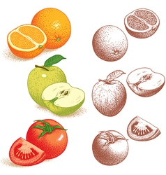 Orange Apple Tomato vector image