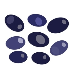 Black olives isolated on white backround vector