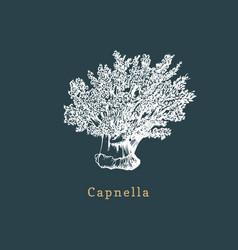 Capnella soft coral drawing vector