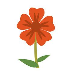 geranium flower natural image vector image