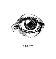 Hand drawn icon of human sight sense in engraved vector