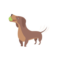 purebred brown dachshund dog playing with ball vector image