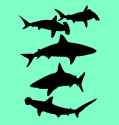 sharks animal gesture silhouette vector image
