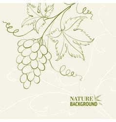 Grape wine card vector image