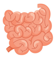 Small intestine vector