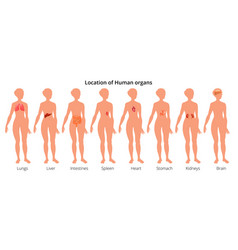 9 human body organ systems realistic educative vector