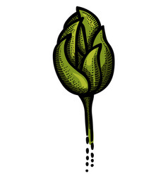 cartoon image of tulip icon plant symbol vector image