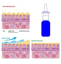 Nasal mucosa cells and micro cilia scheme vector image