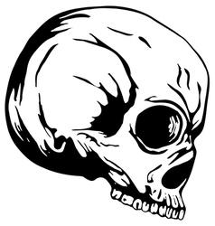 skull2 vector image