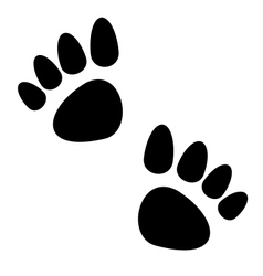 Black animal paws print isolated on white vector image