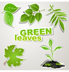set sticker green leaves vector image