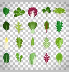 green salad leaves on transparent background vector image