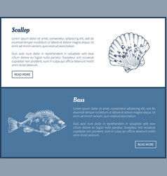 Bass and scallop double color graphic vector