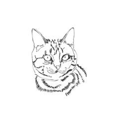 Cat head lineart vector