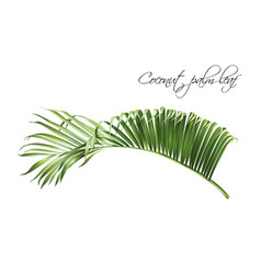 Coconut palm leaf vector