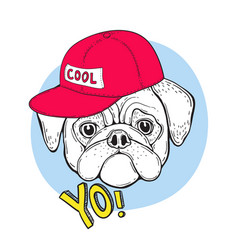 dog pug in blue sunglasses and a red cap with the vector image