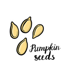 Drawing pumpkin seeds vector