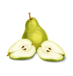 Green natural organic pear fruit vector