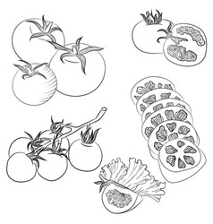 line art various tomatoes vector image