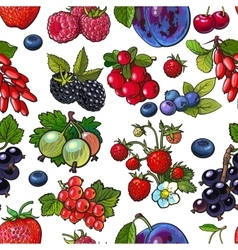 Sketched berries like blueberry raspberry vector