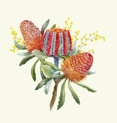 Watercolor australian banksia composition vector