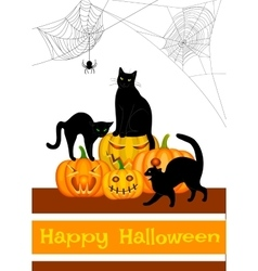 webs black cat and pumpkins vector image vector image