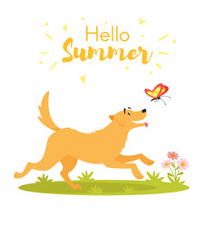 dog with butterfly vector image