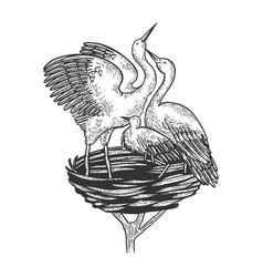 stork birds in nest animal sketch engraving vector image
