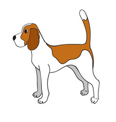 Cute cartoon beagle isolated on white background vector